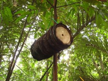Balinese bee hive