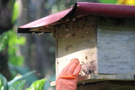 Bee hive Bali