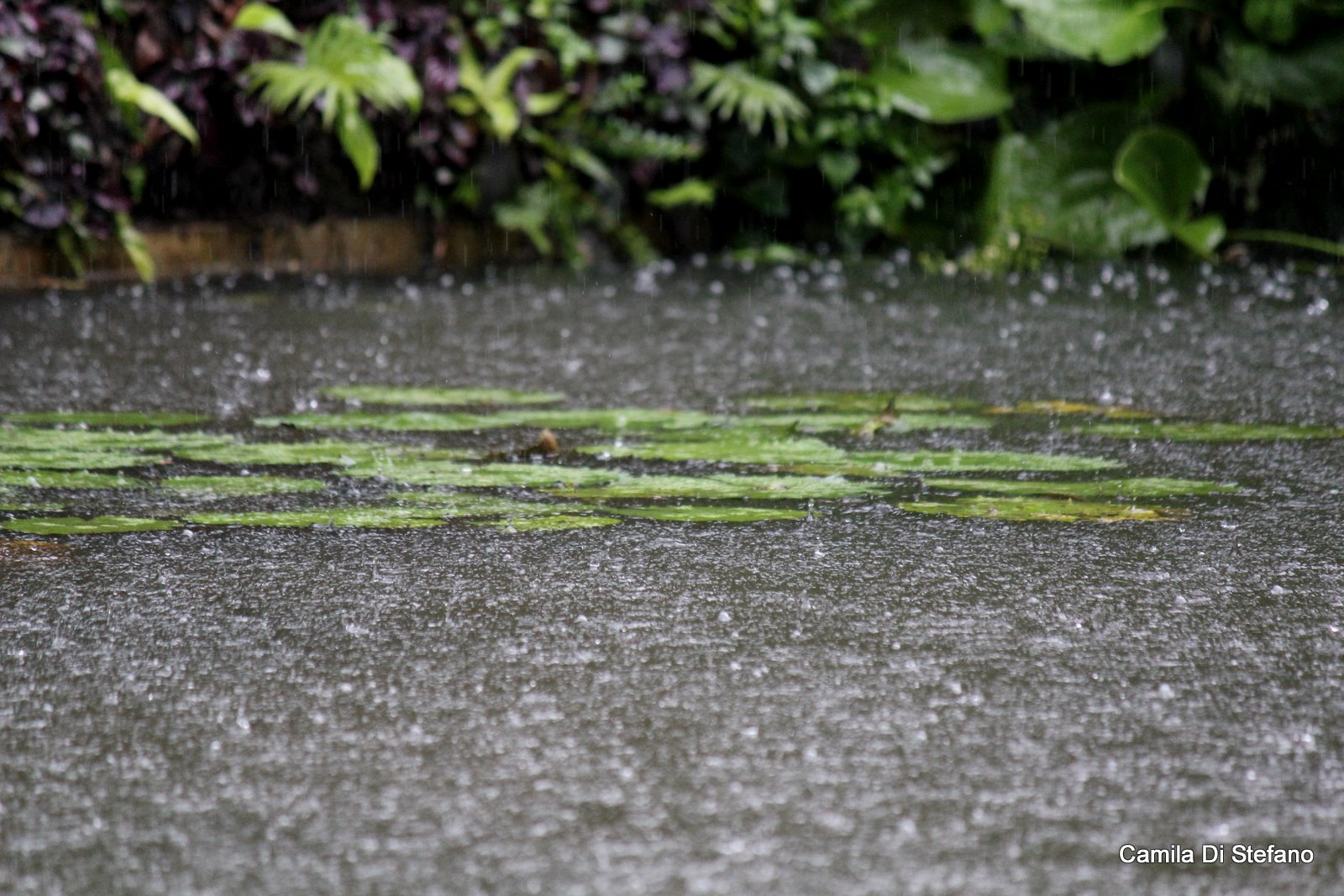 rainy season on bali the jiwa damai blog raindrops