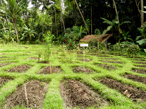 Permaculture design certification course the jiwa damai blog for Permaculture exemple