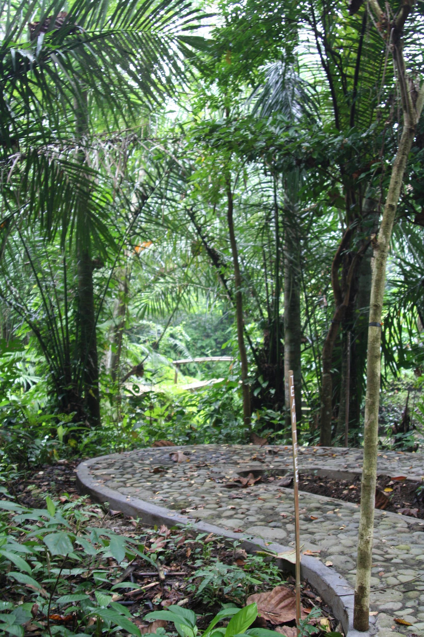 Coconut Forest Bali The Jiwa Damai Blog