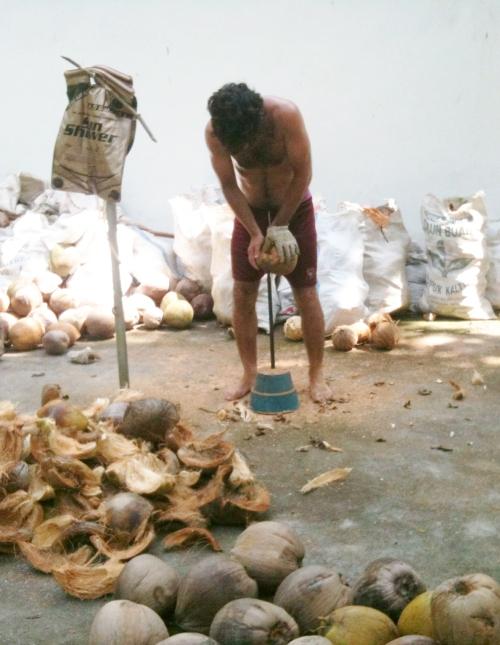 Luca coconuts