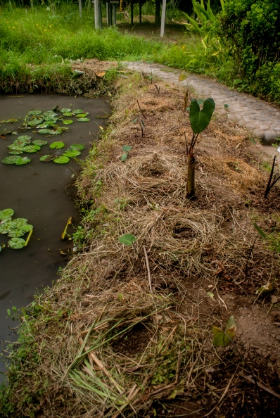 Permaculture style pond